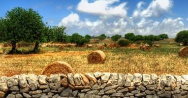 fondazione-info_post-agricoltura